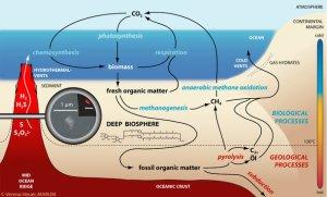 Deep-biosphere-and-biogeochemical_processes_c_v_Heuer